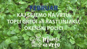 KAJ SEJEMO FEBRUARJA NA VRT, V TOPLO GREDO IN NA OKENSKO POLICO