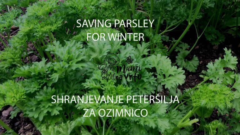 Zero waste: Shranjevanje peteršilja za ozimnico – Saving parsley for winter